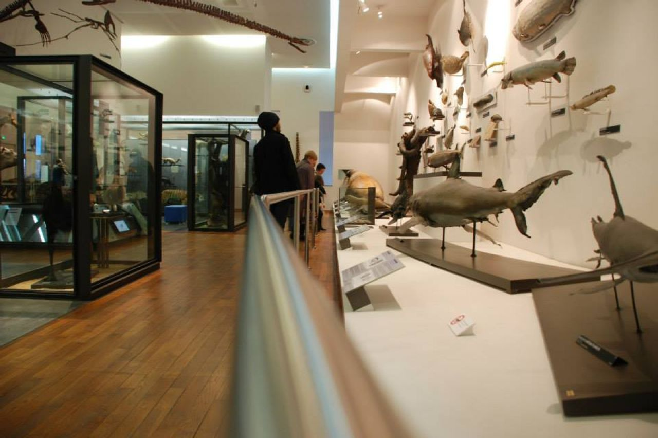 museum aquarium de nancy nancy services publics